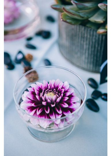 Delicate dahlia blooms remain fresh and beautiful throughout this warm
