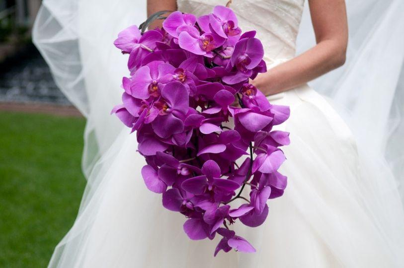 purple phales