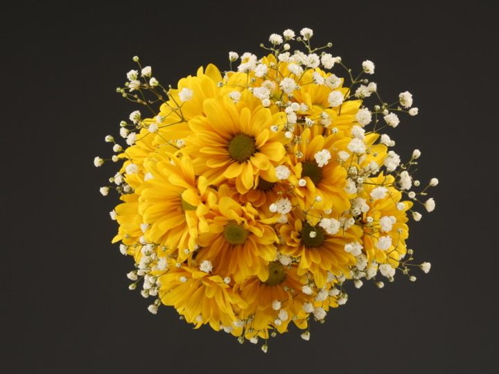 Tmx 1467149918257 9969 Yellow Daisy  Babys Breath Fv Dearborn, MI wedding florist
