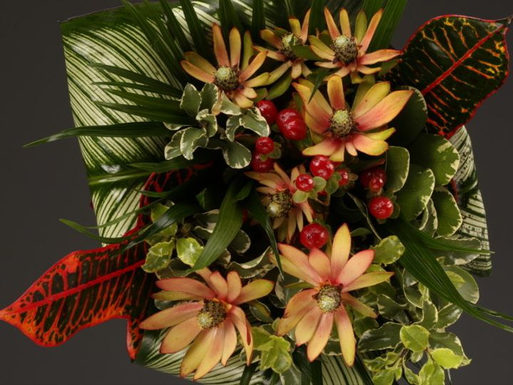 Tmx 1467149941329 9985 Close Up Exotics 1 Santa Rosa, CA wedding florist
