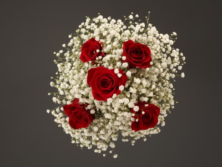 Tmx 1467150658788 9948 Red Rose  Babys Breadth Fv Dearborn, MI wedding florist