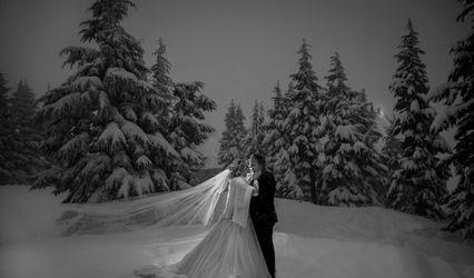 Peter Ellens Photography 2