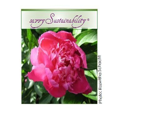 800x800 1200627931372 savvysustainability%c2%ae4peonycredit