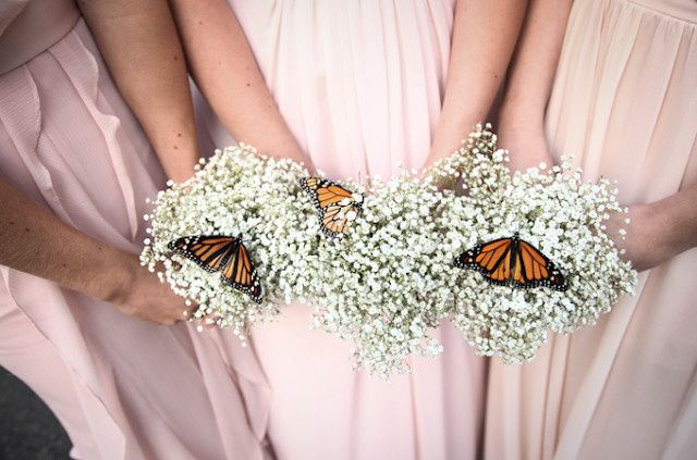 Baby's breath and butterflies