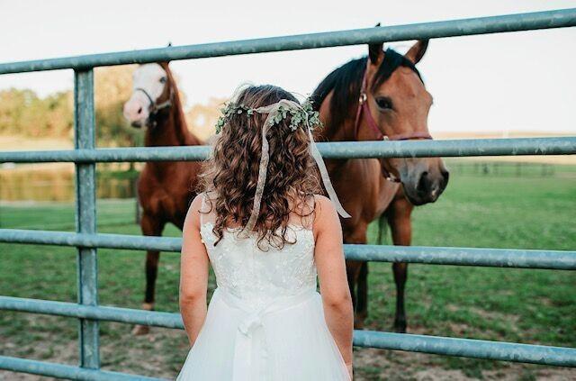 Admiring the horses