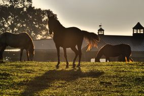 The Stables at Running Creek Ranch