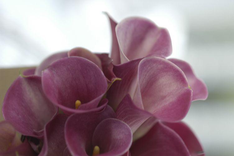 flower2 51 1020079