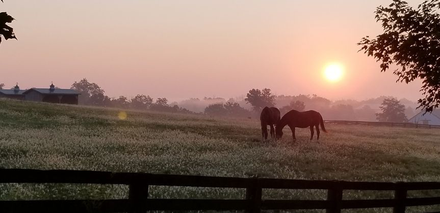 horses at sunrise 51 994079