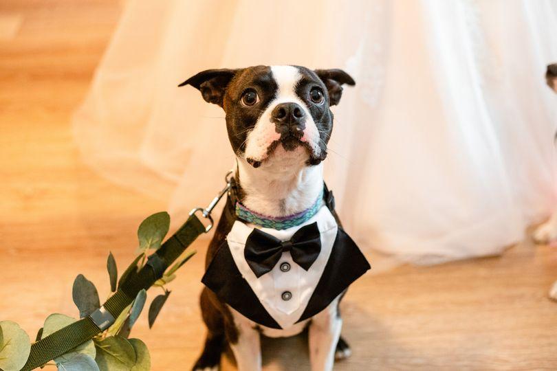 wedding cull 2 79 51 2039079 162439760938098