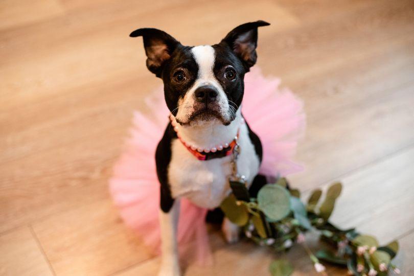 Cute wedding puppy