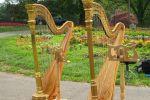 Cheryl Roeske, Harpist image