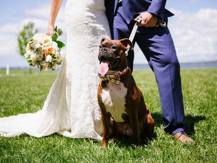 Tmx Chesa P223 Wedding Dog 3 51 3379 Cambridge, MD wedding venue