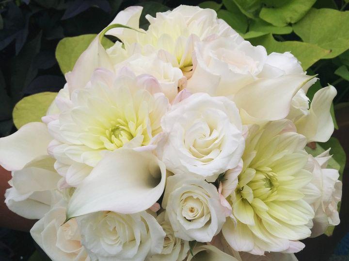 Tmx 1485980165733 Creamblushdahliabouquet Philadelphia, Pennsylvania wedding florist