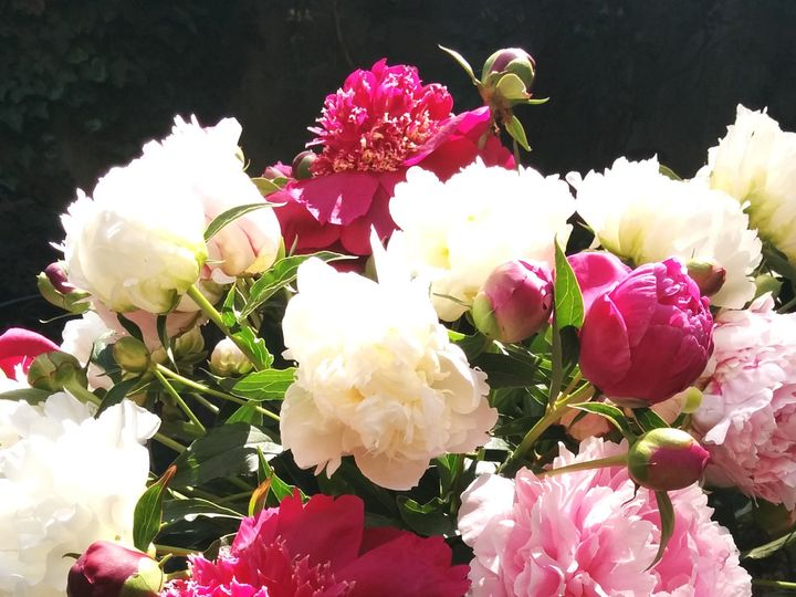 Tmx 1486002116574 Pitcherofpeonies Philadelphia, Pennsylvania wedding florist