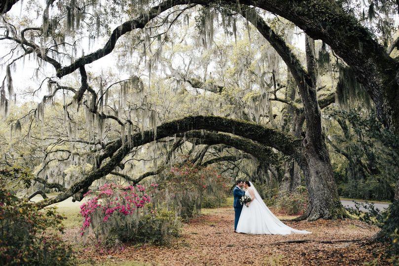 Majestic trees - Amanda Sutton Photography