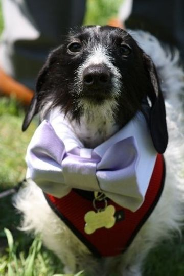 A very special ring bearer