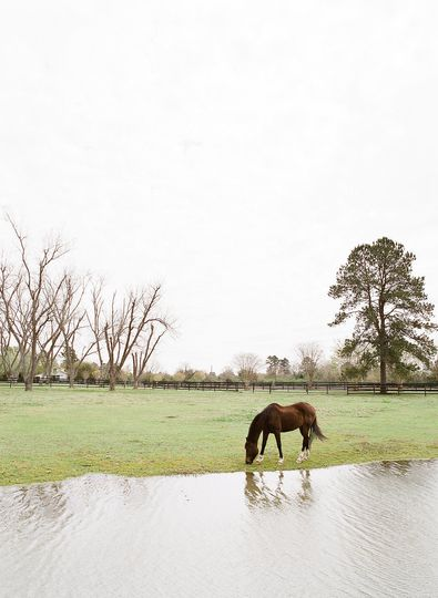 Horse by the lake