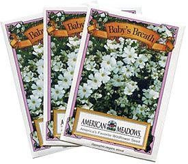 Baby's Breath Seed Packet