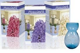 Indoor Grow Kits for Hyacinths:
