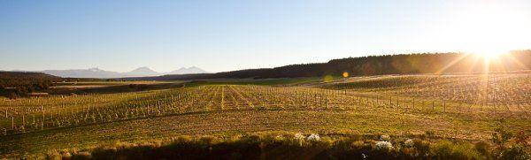 vineyardpanoramic