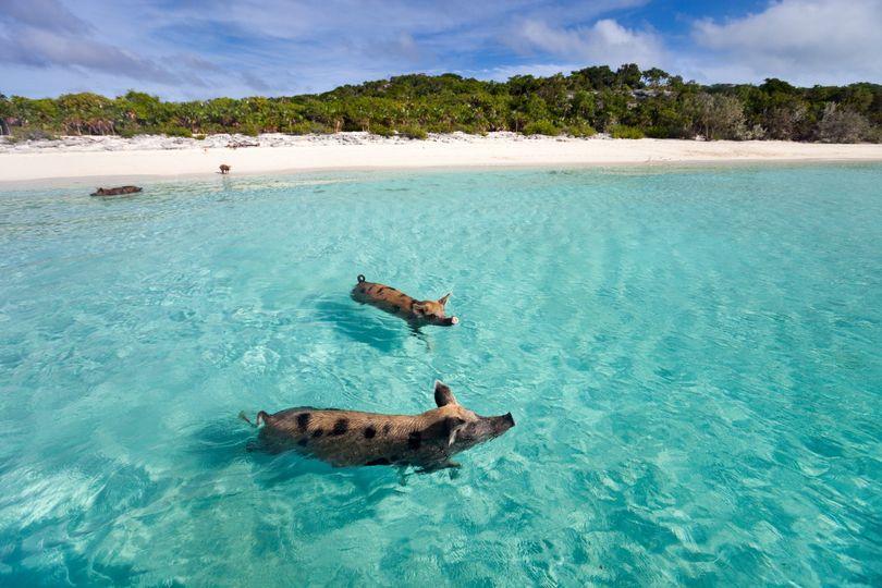 Island of Exuma, Bahamas