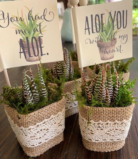 Aloe Wedding Favors