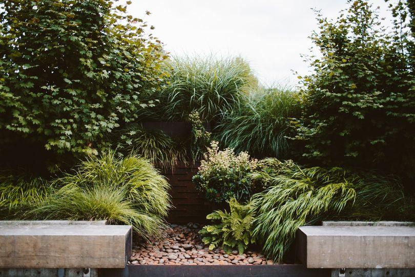 Rainwater garden in courtyard