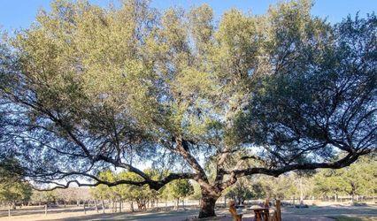 The Tree At Cantera