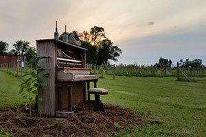 Piano in the vineyard