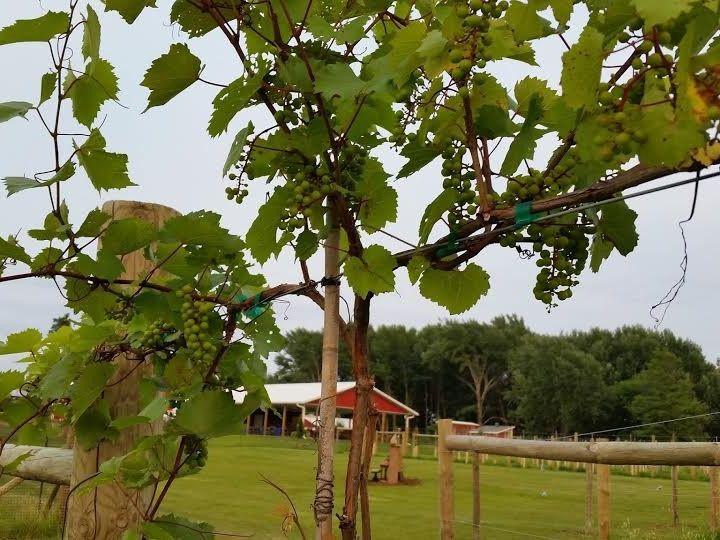 Tmx 1426103155965 Pavilion Hortonville, WI wedding venue