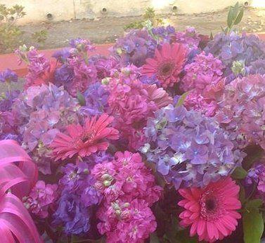 purplehydrenga