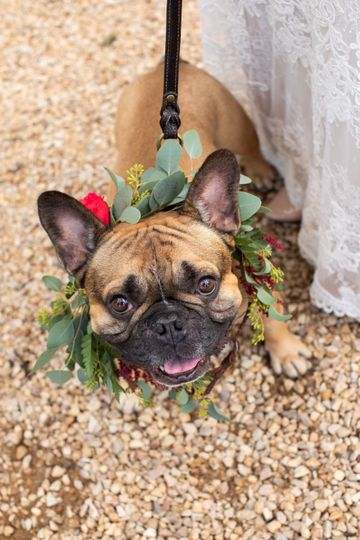 Frenchie dogmaid!
