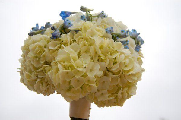 Tmx 1316766521803 PetiteFleurbyTheFrenchBouquetWhiteHydrangeaandBlueDelphiniumBouquet Tulsa wedding florist