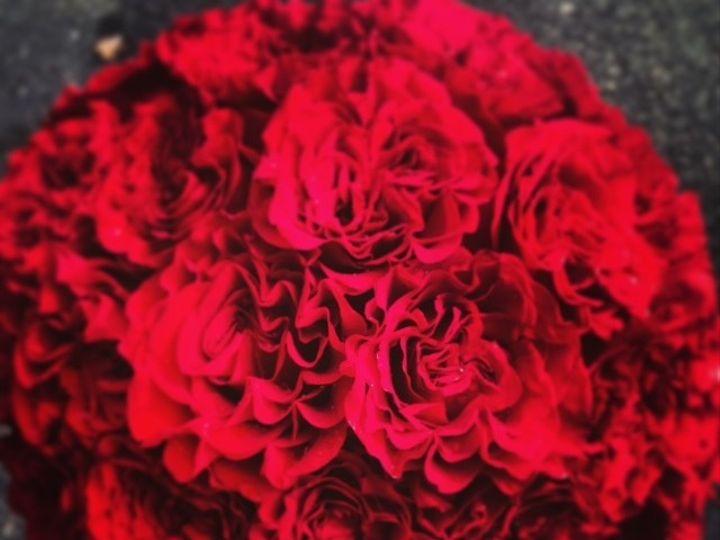 Tmx 1382377864033 Garden Rose Freehold, New Jersey wedding florist