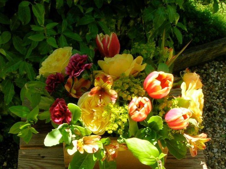 Tmx 1329860841029 DSCN1642 Petaluma wedding florist