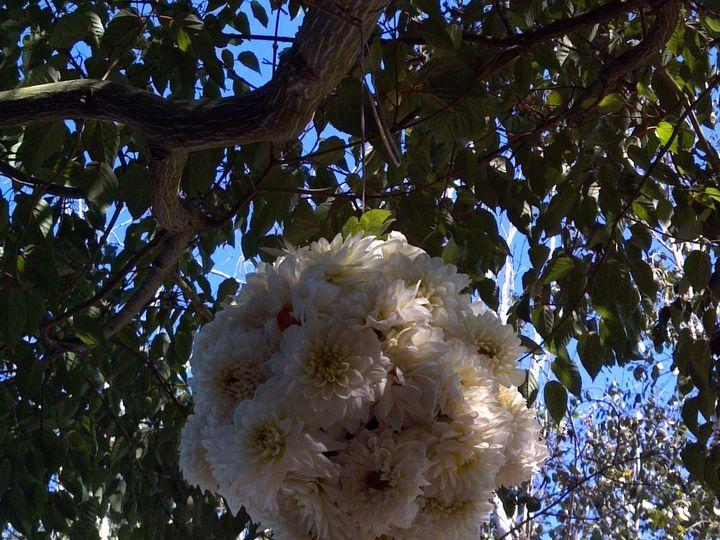 Tmx 1384988262833 2013 07 0616 58 0472 Petaluma wedding florist
