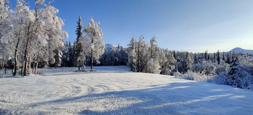 Backyard during winter