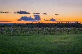 Pumpkin Hill Vineyard