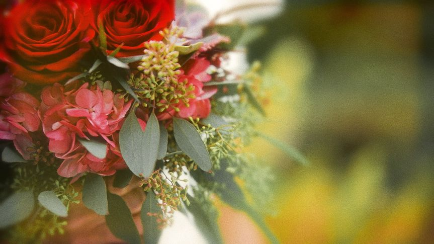 pitcher flowers 1920x1080 51 968989 v2