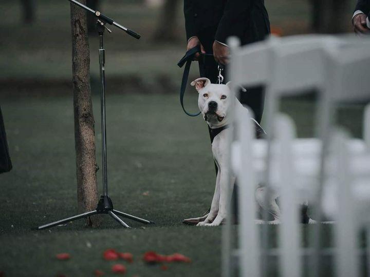 Tmx Dog 51 967099 Shelby, MI wedding planner
