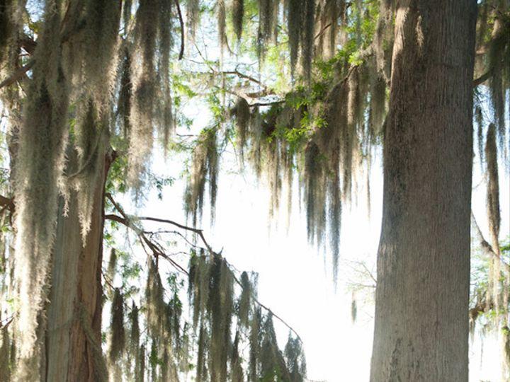 Tmx Portrait Photographer Florida 015 51 18099 Altamonte Springs, FL wedding photography