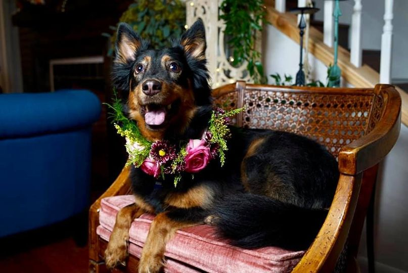 Floral wreath for dog