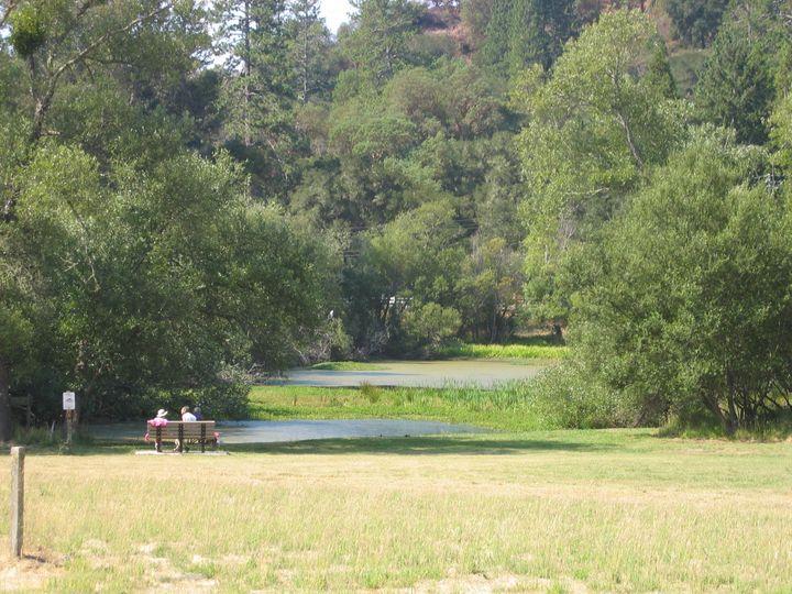 quail pond