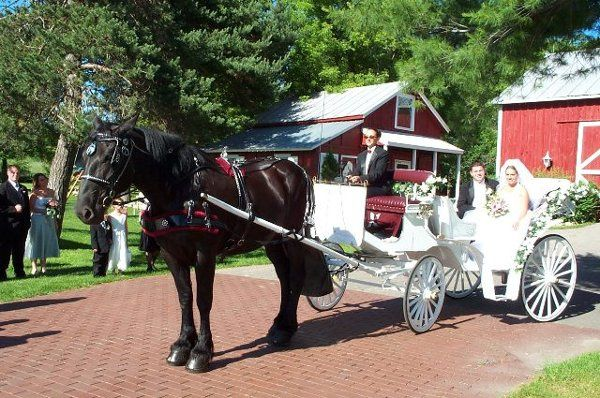 """Outdoor wedding in Rockford, MI with our horse """"Peggy"""" and classic style carriage"""