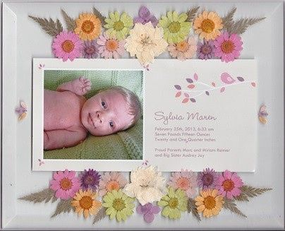 Birth announcement with daisies prior to being framed.