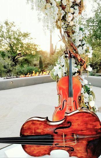 Lovely violins