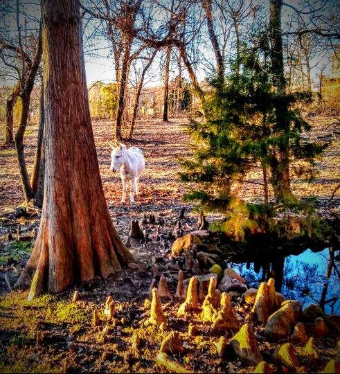 Enchanted forest & pond
