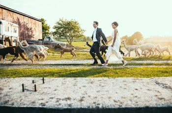 8 Totally Unique Vermont Wedding Venues