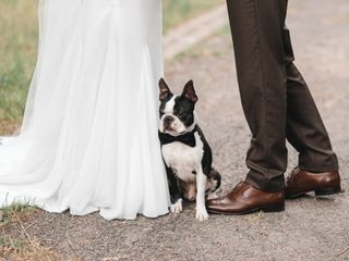The Best Dog Breeds for Engaged Couples and Newlyweds