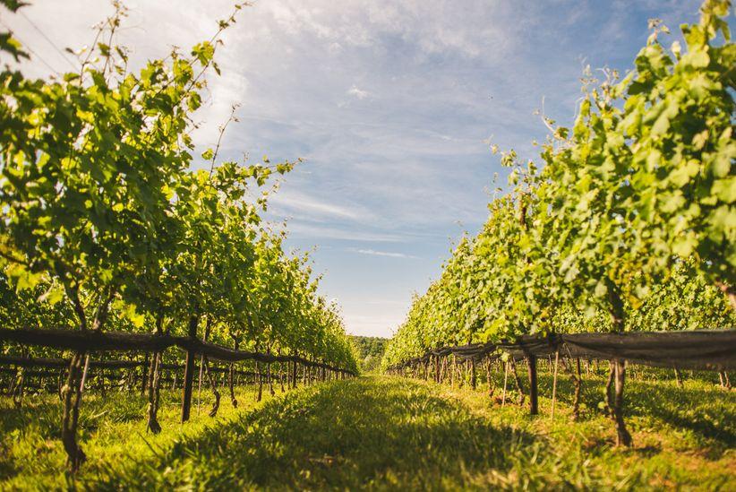 vineyard wedding venue